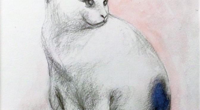 うちの猫、チロちゃんです